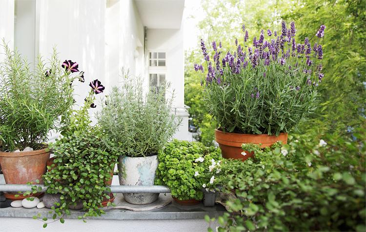 цветы-на-балконе